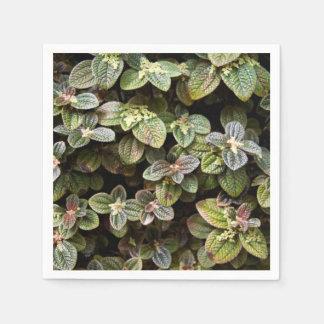Servilletas de papel de Urticacae