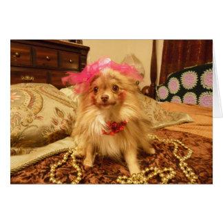 Sesión fotográfica del mascota - 7ma en serie tarjeta de felicitación