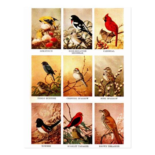 Set of Birds Postcard