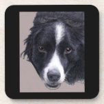 set of cork coasters - border collie 1