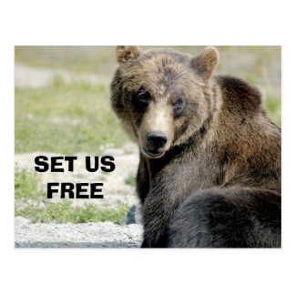 Set Us Free, Save the Bears Postcard