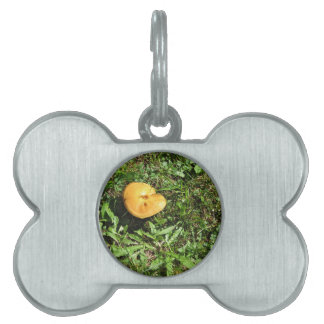 Seta amarilla en un prado verde placas de nombre de mascota