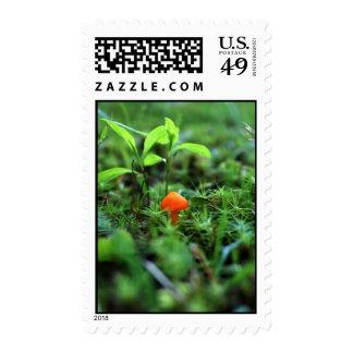 Seta anaranjada minúscula sellos