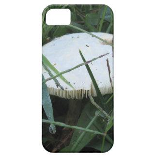 Seta blanca en un prado verde iPhone 5 fundas