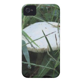 Seta blanca en un prado verde iPhone 4 Case-Mate fundas