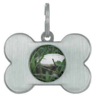 Seta blanca en un prado verde placa mascota