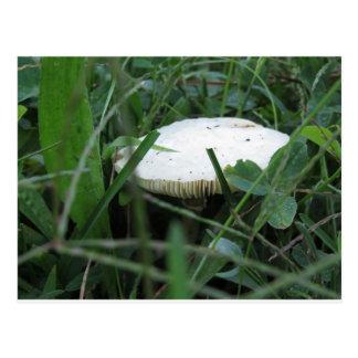 Seta blanca en un prado verde postales