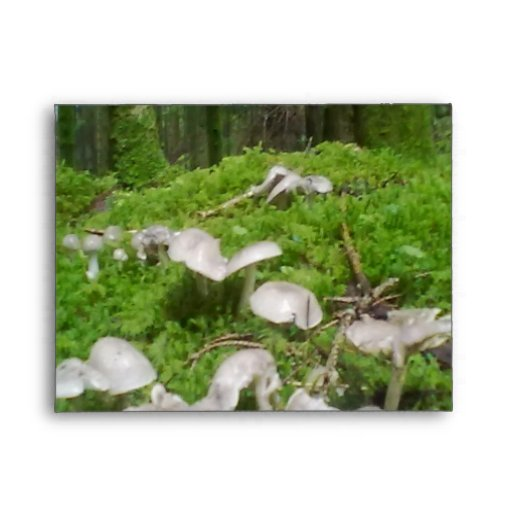 Seta del bosque