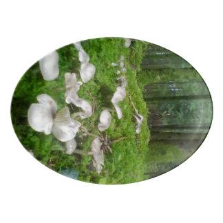 Seta del bosque badeja de porcelana