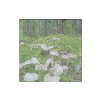 Seta del bosque imán de piedra