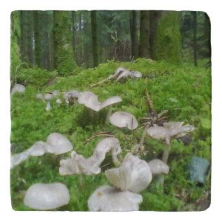 Seta del bosque salvamanteles