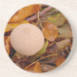 Seta del puffball del Lycoperdon Posavasos Manualidades
