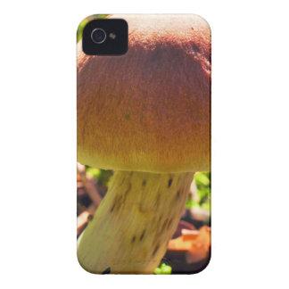 Seta en el Forrest iPhone 4 Case-Mate Cárcasas