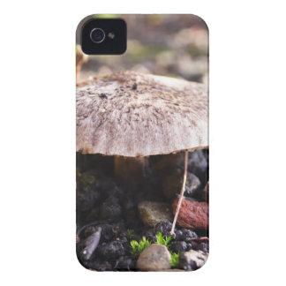 Seta en Forrest Case-Mate iPhone 4 Cobertura