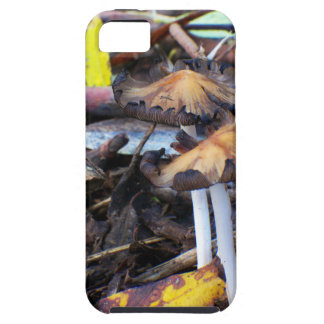 Seta en la casamata del piso 4 de la selva tropica iPhone 5 Case-Mate funda