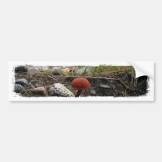 Seta en un banco rocoso etiqueta de parachoque