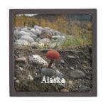Seta en un banco rocoso; Recuerdo de Alaska Caja De Regalo De Calidad