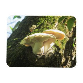 Seta que crece en árbol imán flexible