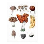 Setas botánicas del vintage postal