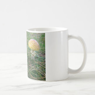 Setas de la amanita taza de café