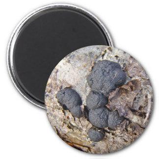 Setas de las bolas del carbono (concentrica de Dal Imanes De Nevera