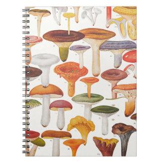 Setas de los champiñones de Les Cuaderno