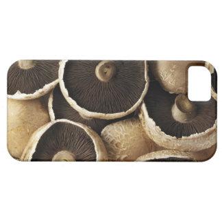 Setas de Portobello en el fondo blanco iPhone 5 Case-Mate Carcasa