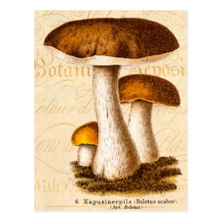 Setas de Scaber Brown de la seta de los 1800s del Tarjetas Postales