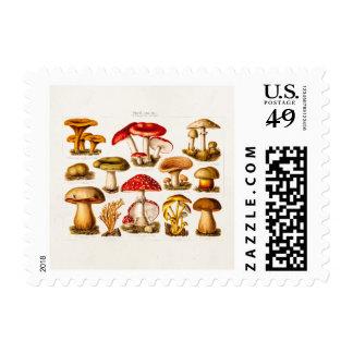 Setas del rojo de la variedad de la seta de los sello postal