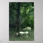 Setas en bosque verde impresiones