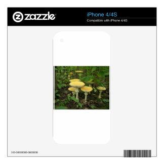 Setas en el piso del bosque iPhone 4S calcomanía