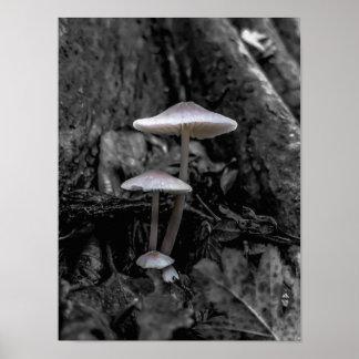 Setas en las maderas poster