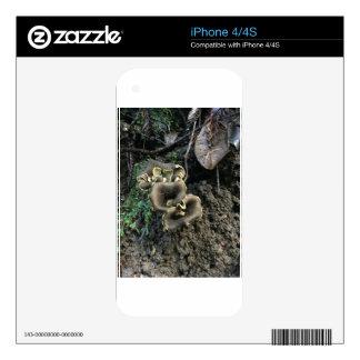 Setas florecientes iPhone 4S skin