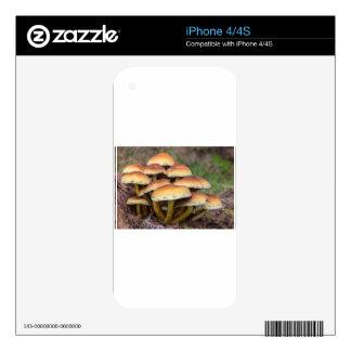 Setas marrones del grupo en bosque de la caída iPhone 4S calcomanía