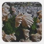Setas salvajes del bosque de Oregon Colcomanias Cuadradas Personalizadas