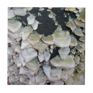 Setas salvajes en árbol de descomposición tejas  ceramicas