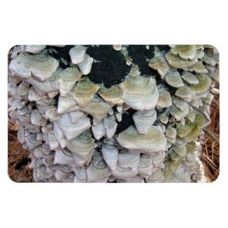 Setas salvajes en árbol de descomposición imán de vinilo