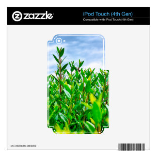 Seto verde iPod touch 4G calcomanía