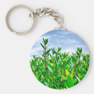 Seto verde llavero redondo tipo pin