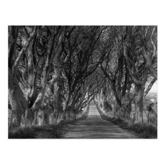 Setos de la oscuridad en blanco y negro tarjetas postales