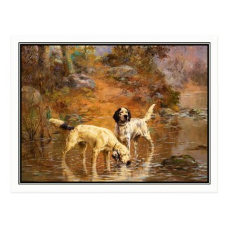Setters in a Cooling Stream by Percival Rosseau Postcard