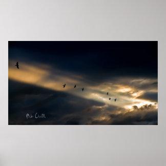 Seven Bird Vision, Bob Orsillo Poster