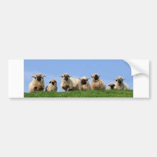 seven curious rasta sheep bumper sticker