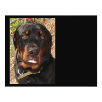 Seven Months of Rottie Card