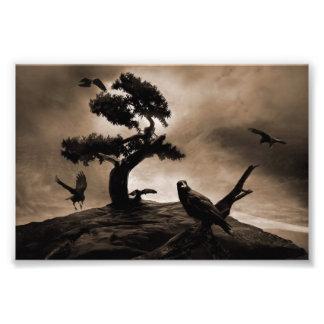 Seven Ravens Photo Print