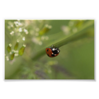 Seven-spot Ladybird Photo Art