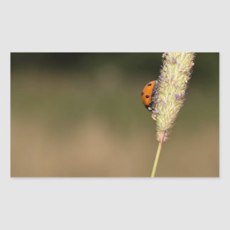 Seven-spot Ladybird Rectangular Sticker