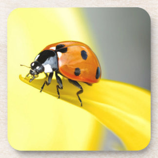 Seven Spot Ladybird takes a walk on a Sunflower Beverage Coaster