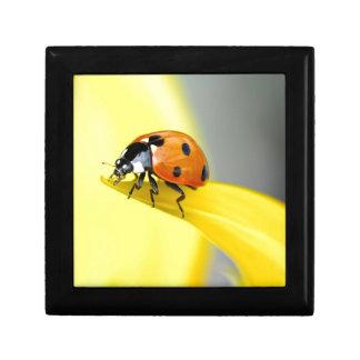 Seven Spot Ladybird Takes a Walk on a Sunflower Keepsake Box