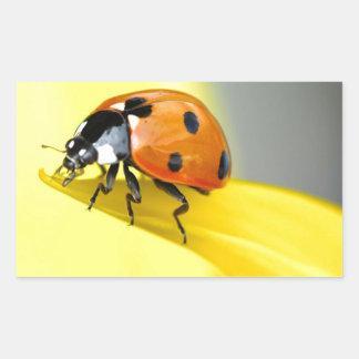 Seven Spot Ladybird takes a walk on a Sunflower Rectangular Sticker